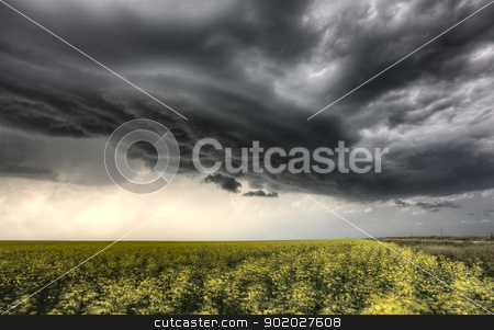 Storm Clouds Saskatchewan stock photo, Storm Clouds Saskatchewan yellow bright canola field by Mark Duffy