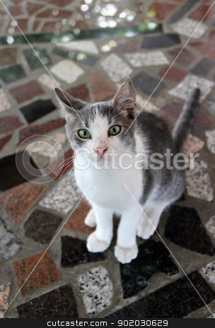 Funny kitten stock photo, Funny cat by Tatiana Mihaliova