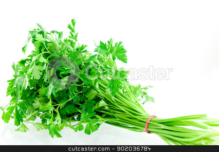 Parsley stock photo, Studio shot bundle of parsley  by elaplan