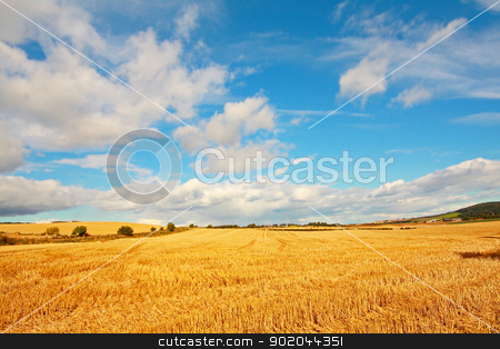 Scenic landscape with fields of wheat  stock photo, Scenic landscape with fields of wheat on Summer day by Juliet Photography