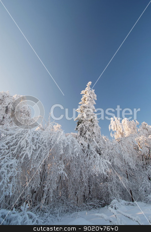 The old fir & oak trees covered with a thick layer of rime in Oj stock photo, The old fir & oak trees covered with a thick layer of rime in Ojcowski National Park, Poland. by Kaja Twardy