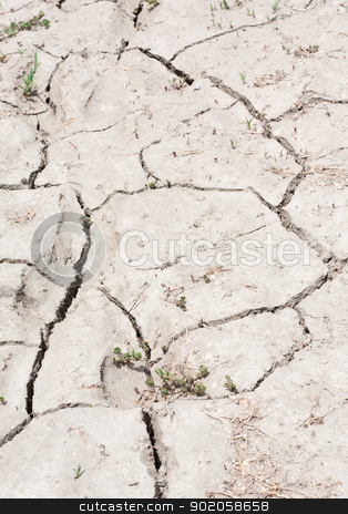 Parched and Cracked Dry Land in Drought stock photo, A stretch of cracked, parched, dry land filling the frame. by Brigida Soriano