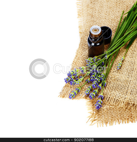 aromatherapy stock photo, lavender aromatherapy (fresh lavender flowers,  essential oil) over white by klenova