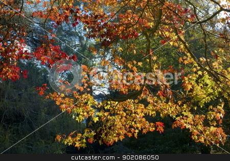 Colorful autumn fall tree leaves. stock photo, Colorful autumn fall tree leaves. by Stephen Rees