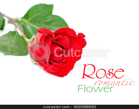 Red rose with leaves isolated on white stock photo, Red rose with leaves isolated on white by Vitaliy Pakhnyushchyy