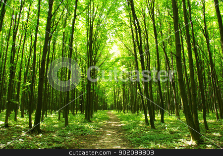 forest path stock photo, a path is in the green forest by Vitaliy Pakhnyushchyy