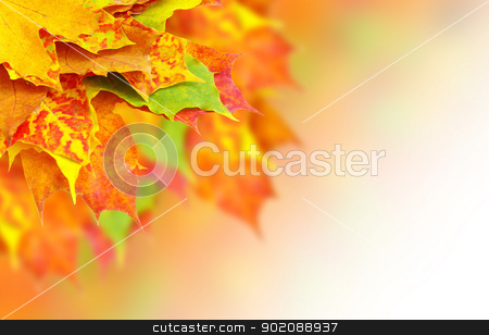 autumn leaves  stock photo, autumn leaves  by Vitaliy Pakhnyushchyy