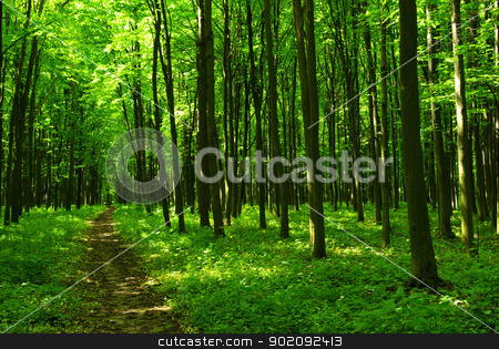 forest stock photo, a path is in the green forest by Vitaliy Pakhnyushchyy