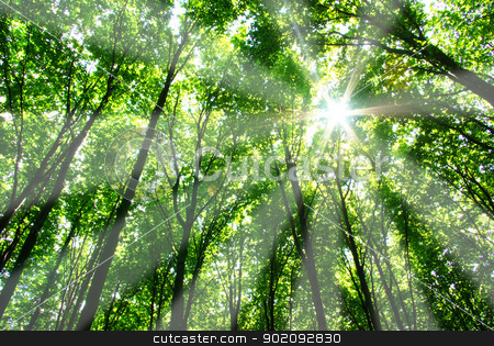 forest stock photo, green leaves background in sunny day by Vitaliy Pakhnyushchyy