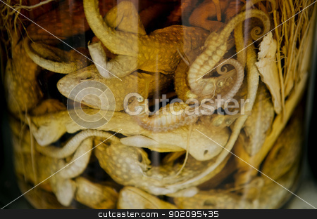 pickled animals traditional medicine in vietnam stock photo, pickled animals traditional medicine in vietnam by travelphotography
