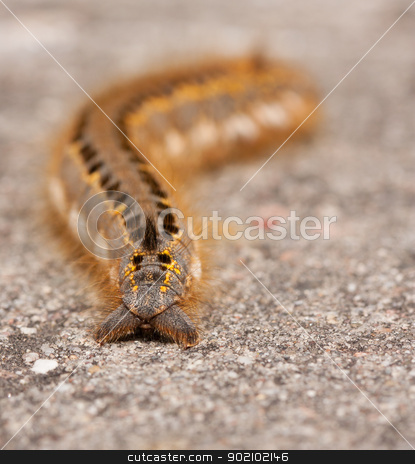 A caterpillar  stock photo, A caterpillar on a stone by michaklootwijk
