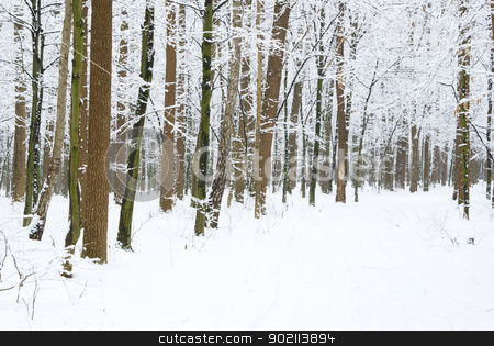 forest stock photo, beautiful winter forest  and the road by Vitaliy Pakhnyushchyy