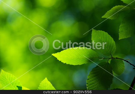 leaves stock photo, green leaves background in sunny day by Vitaliy Pakhnyushchyy