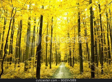 forest path  stock photo, a path is in the autumn forest      by Vitaliy Pakhnyushchyy