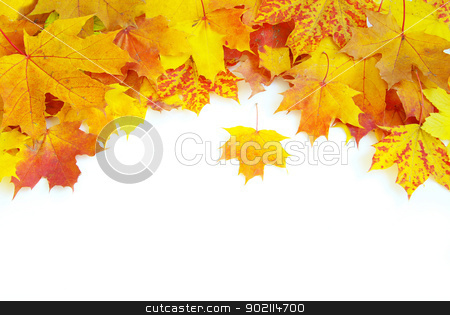 autumn maple leaves  stock photo, autumn maple leaves isolated on a white by Vitaliy Pakhnyushchyy