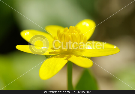 flowers stock photo, abstract yellow flowers on field by Vitaliy Pakhnyushchyy