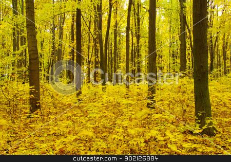 autumn forest stock photo, Early morning sun in the autumn forest by Vitaliy Pakhnyushchyy