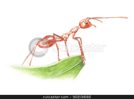 Red ant stock photo, Painting with watercolor on paper  by poorbike