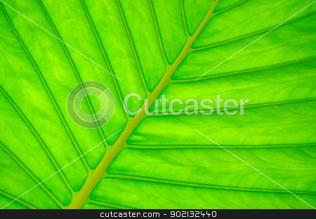 green leaf  stock photo, green leaf texture of a plant close up by Vitaliy Pakhnyushchyy