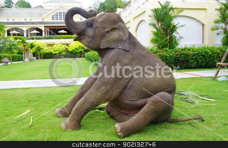 asian elephant  stock photo, asian elephant on green garden by Vitaliy Pakhnyushchyy