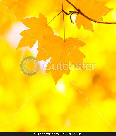 autumn leaves stock photo, autumn leaves background in sunny day by Vitaliy Pakhnyushchyy