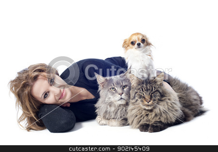 woman and pets stock photo, portrait of a purebred  maine coon cats , chihuahua and woman on a white background by Bonzami Emmanuelle