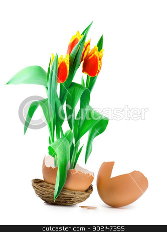 tulips in egg stock photo, tulips growing from easter egg Isolated on white background by Vladyslav Danilin