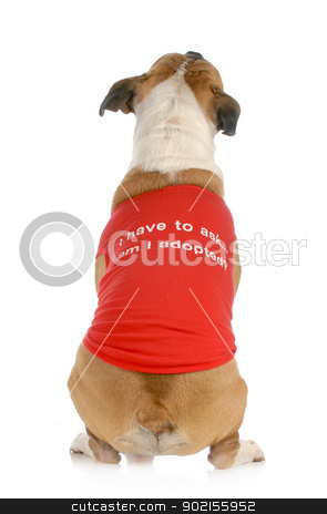 animal rescue or adoption stock photo, animal rescue or adoption - dog with back to camera with message on shirt