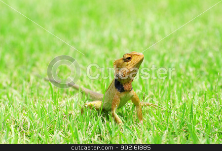 lizard  stock photo,  lizard strolling in the grass by Vitaliy Pakhnyushchyy