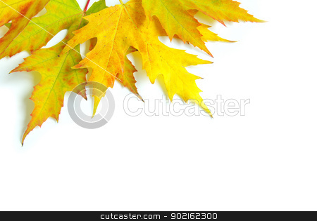 autumn leafs  stock photo, autumn maple leafs isolated on a white  by Vitaliy Pakhnyushchyy