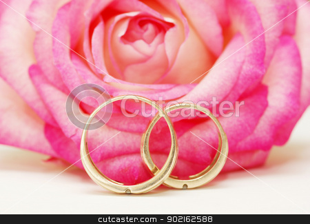 rings and rose  stock photo, wedding rings and rose on white by Vitaliy Pakhnyushchyy