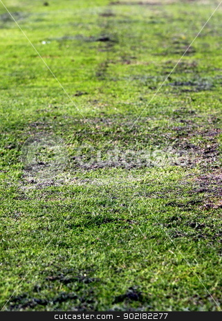 Old Green Grass stock photo, Old grunge green textured grass as background.  Center Focus  by Henrik Lehnerer