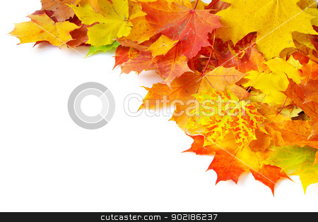autumn maple stock photo, autumn maple leafs isolated on a white  by Vitaliy Pakhnyushchyy