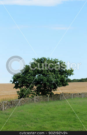 Lone tree and dry stone wall stock photo, Lone tree and dry stone wall in English countryside. by Martin Crowdy
