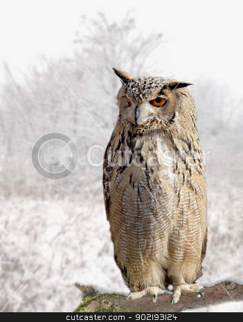 An Owl stock photo, Close up of an owl standing on the branch of a tree by Fabio Alcini