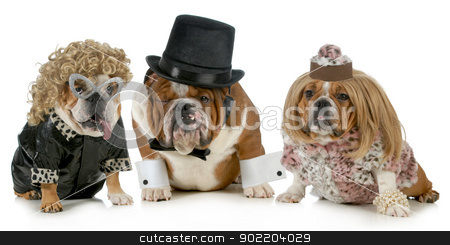 lucky man stock photo, males bulldog with two females all dressed in formal clothing isolated on white background by John McAllister