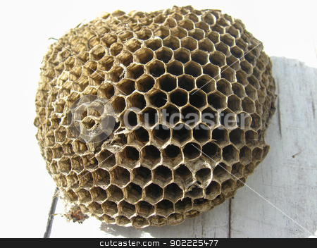 the nest of wasps stock photo, the image of cells of nest of wasps by Alexander Matvienko