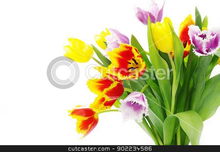 tulips  stock photo, bouquet of the tulips on white background by Vitaliy Pakhnyushchyy