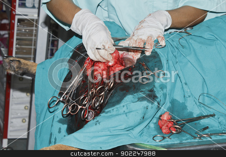 Surgery tumor from breast of Rottweiler stock photo, Surgery tumor from breast of Rottweiler in the operating room by Suphatthra China