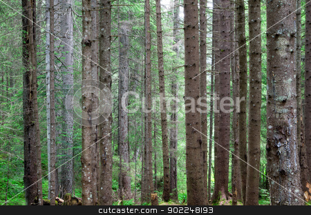 forest   stock photo, green forest  background in a sunny day by Vitaliy Pakhnyushchyy