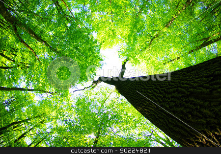 forest        stock photo, Early morning sun in the green forest        by Vitaliy Pakhnyushchyy