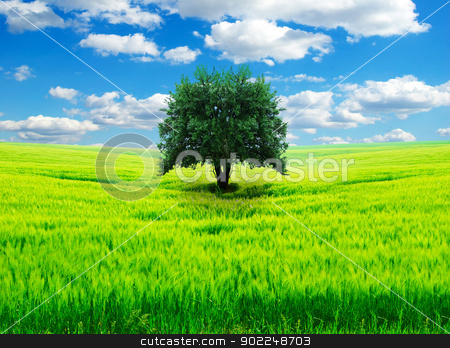 field stock photo, field on a background of the blue sky by Vitaliy Pakhnyushchyy