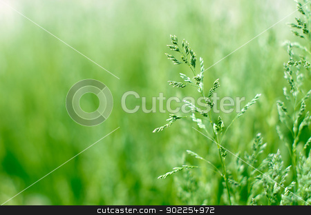 grass  stock photo,  green grass a blurred background by Vitaliy Pakhnyushchyy