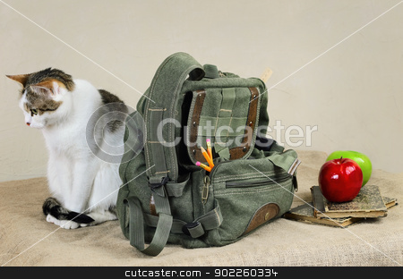 Cat And Backpack  stock photo, Cat Sitting Near The Backpack On The Linen Cloth by Sergej Razvodovskij
