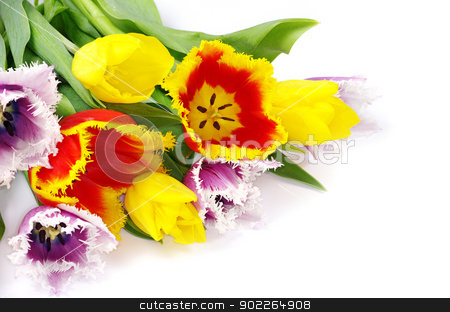 tulips  stock photo, bouquet of the tulips on white background by Vitaliy Pakhnyushchyy