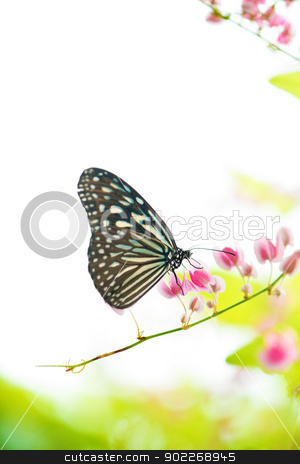 Butterfly  stock photo, Butterfly on flowers. by szefei