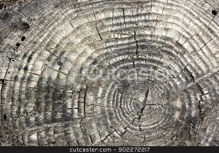 tree texture with rings stock photo, the texture of an old tree with season rings and crackes by SkyLynx