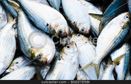 Fresh fish stock photo, Fresh fish at the seafood market  by boonsom