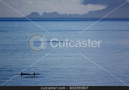 Killer whales stock photo, Family of killer whales swimming in open ocean near coast of norway by Harvepino