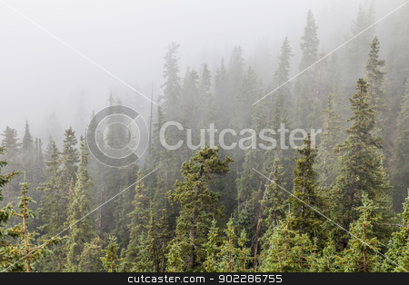 mountain forest in fog stock photo, mountain spruce forest in fog, Rocky Mountains near Loveland Pass, Colorado by Marek Uliasz